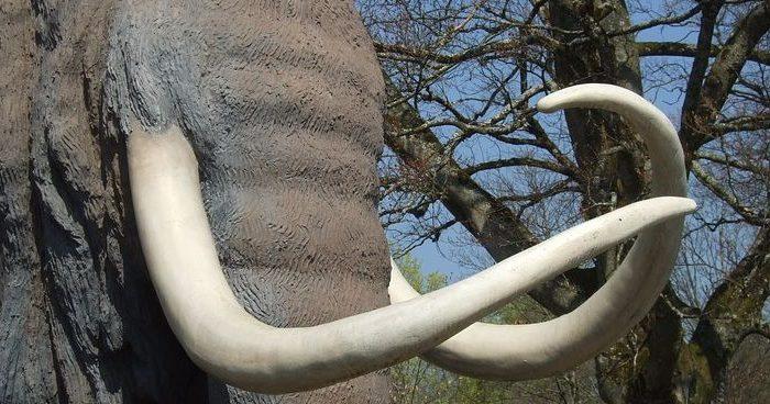 Los mastodontes pisaron Buenos Aires