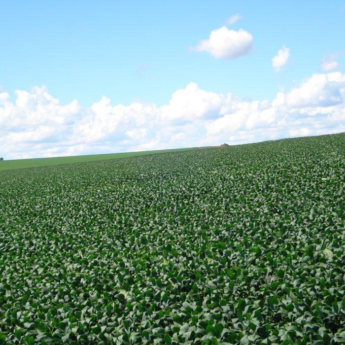 Tecnologías para expandir la agroindustria