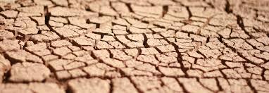 Cultivos de cobertura en los esquemas productivos para prevenir la erosión