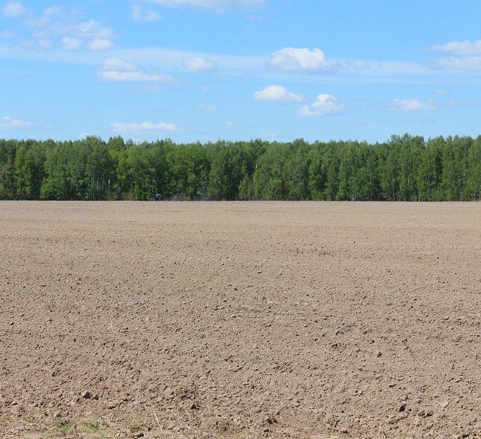 Con la producción de granos ya no alcanza