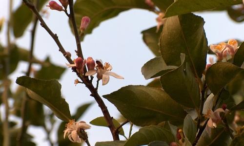 Miel con aroma floral y un dulzor débil