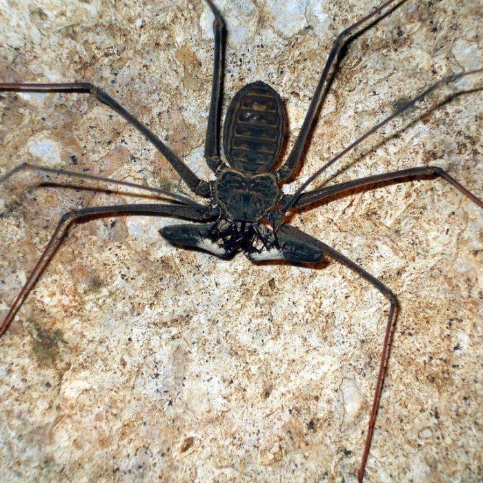 Aplicación digital para identificar arañas y escorpiones