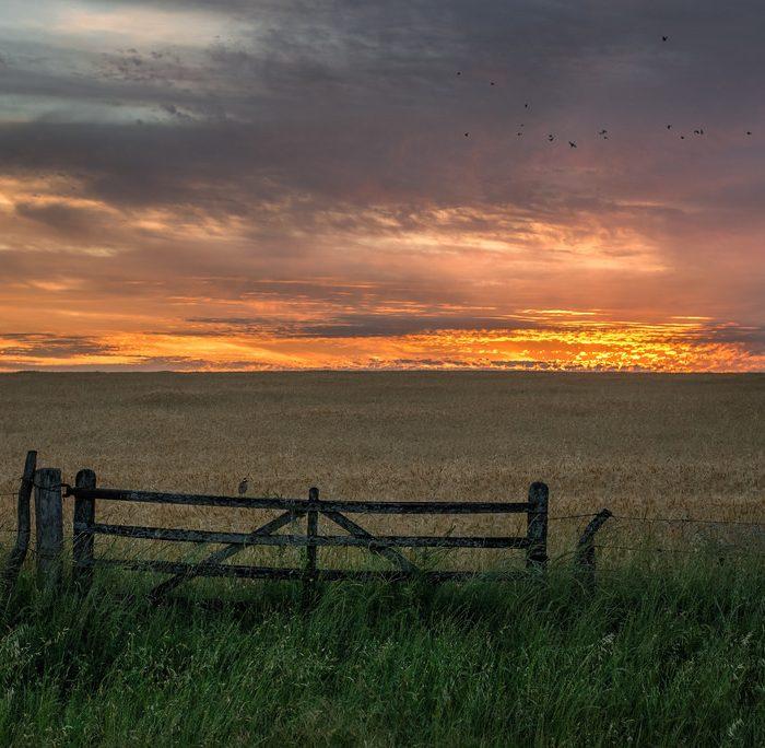 ¿Qué nos aporta la producción del campo?: El Campo Argentino en Números
