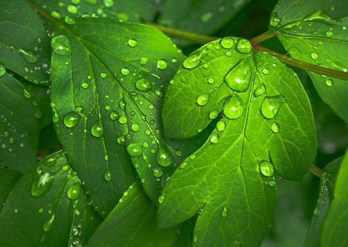 Las plantas reaccionan a la anestesia de manera similar a animales y humanos