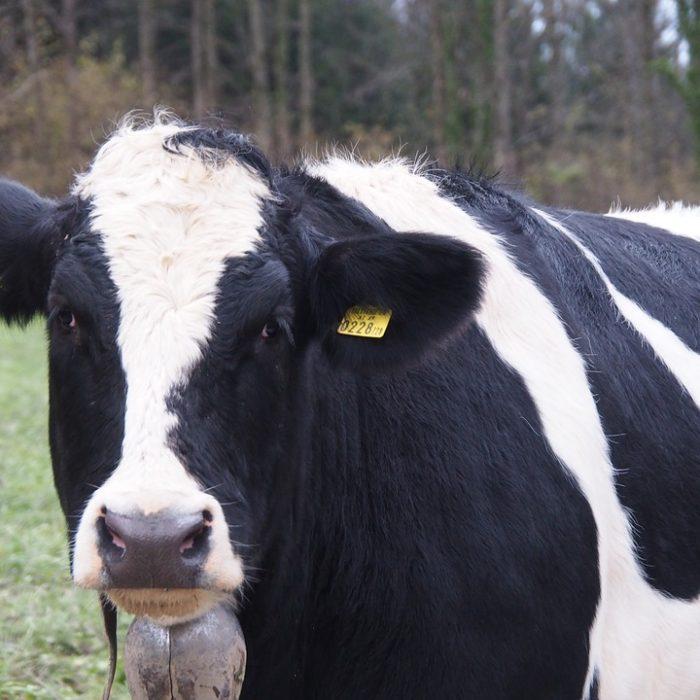 Las exportaciones de carne vacuna en 2018 crecieron un 78% por encima de las registradas en 2017