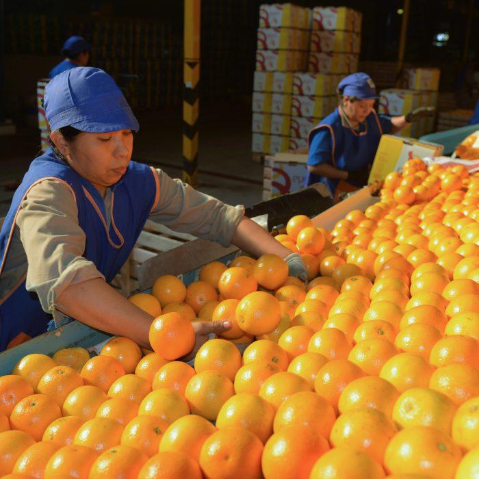 Inversión de más de U$S 8 millones para el negocio de frutas frescas, jugos y aceites esenciales