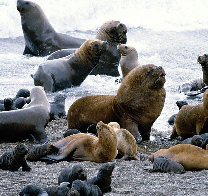 Basura y falta de alimento: los principales problemas de la fauna marina en provincia de Buenos Aires