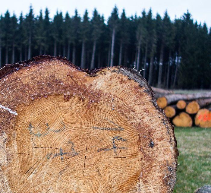 La producción argentina de maderas y muebles supera los 13 mil millones de dólares anuales