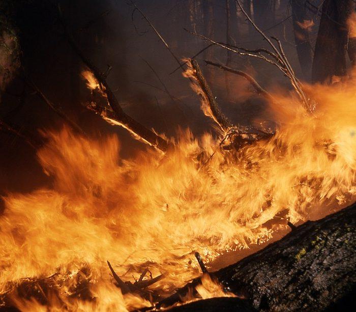 Ambiente Móvil: la app para reportar incendios forestales y rurales
