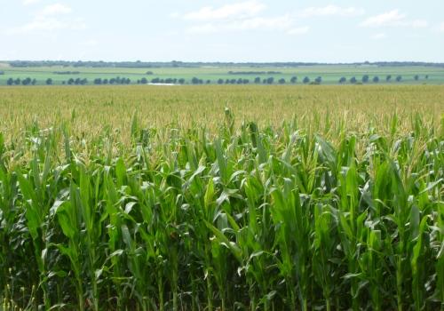 El cambio del clima deja huella en la agricultura – Parte II