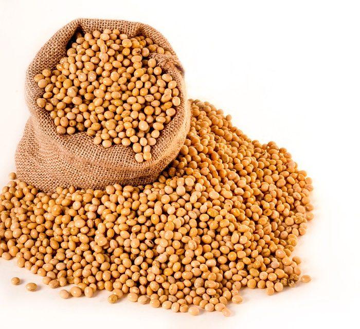 Pre-inoculado dehasta 60 días en semillas de soja