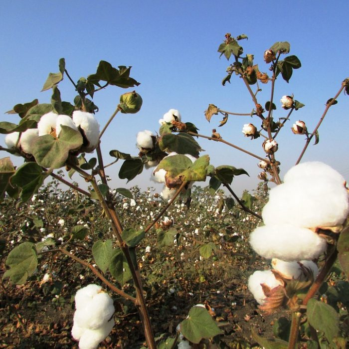 La primera marca argentina que fabrica prendas de algodón 100% biodinámico certificado