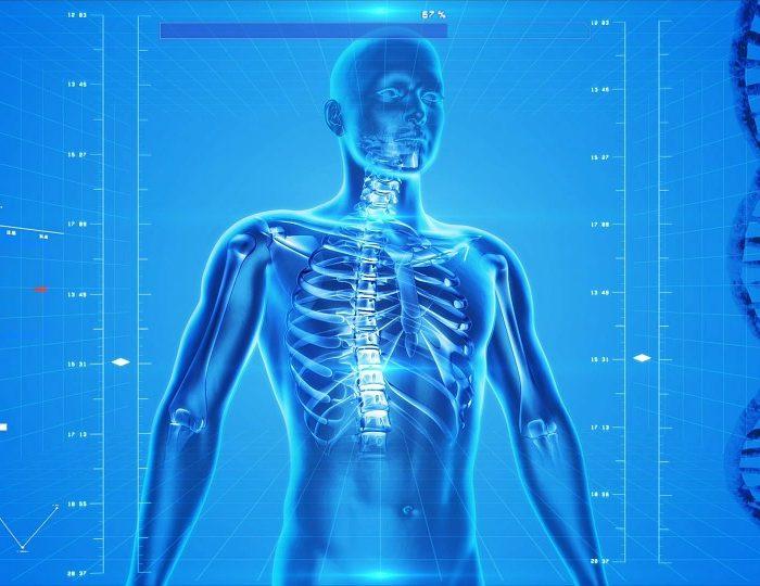 Descubren composición de tejidos del cuerpo humano que podrían facilitar cura de enfermedades