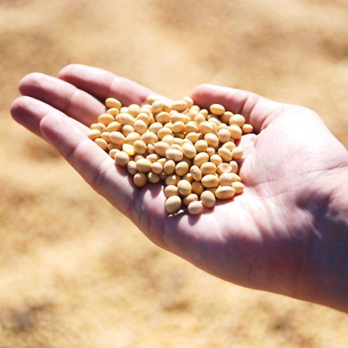 Compañía dedicada al agro obtiene préstamo por US$ 5 millones
