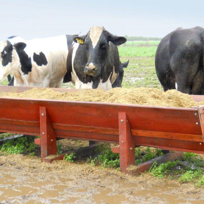 Especialistas advierten que el buen trato hacia los animales redunda en resultados productivos