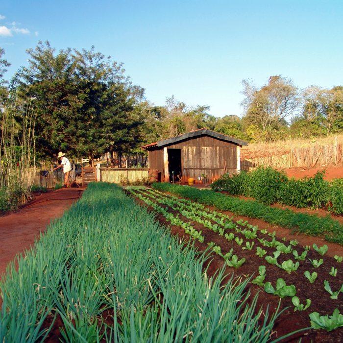En el siglo XXI, el desarrollo rural es sinónimo de desarrollo sostenible