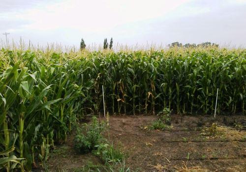 Los agrominerales mejoran los suelos y elevan los rindes
