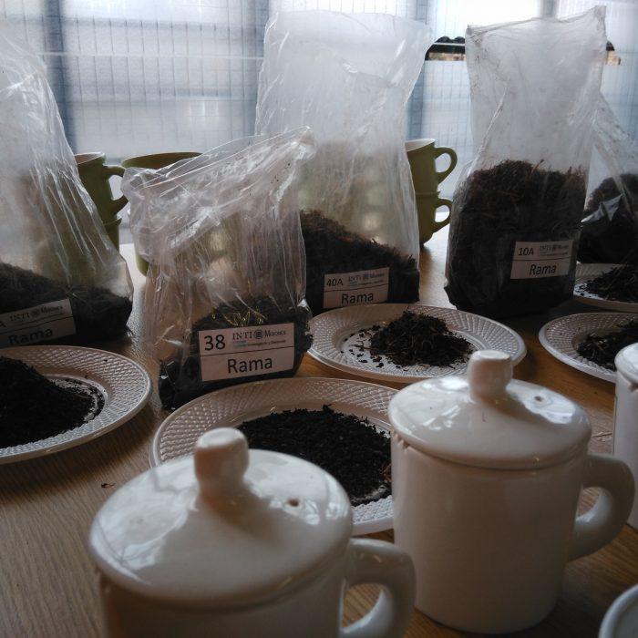 El té argentino en números