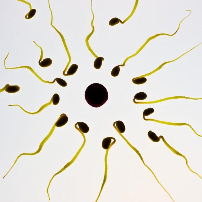 Software de libre distribución para medir la movilidad de los espermatozoides