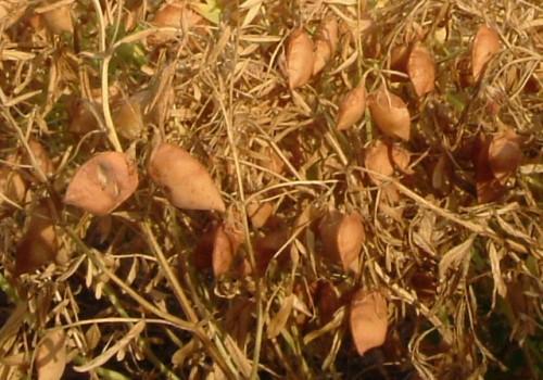 Los beneficios de elegir un invierno con legumbres