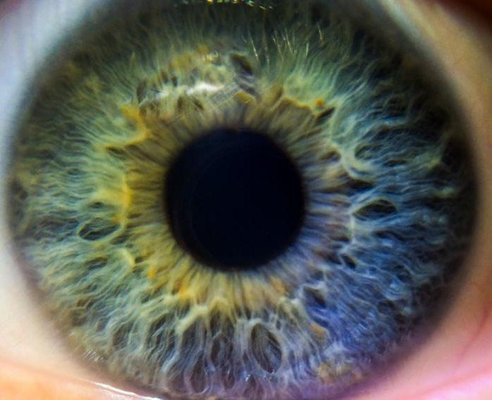 """Primer estudio clínico sobre cirugía de retina asistida por robots logró resultados """"exitosos"""""""