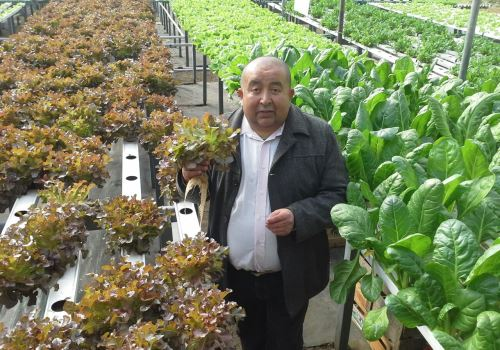 Impulsan el cultivo de huertas hidropónicas – Parte I