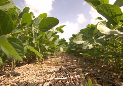 Nuevo Índice FADA : el Estado y la renta agrícola