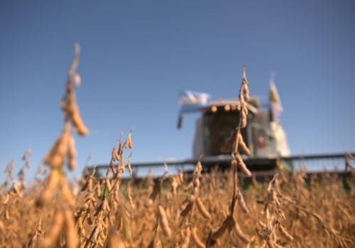 Informe de USDA sobre el mercado de granos en Argentina