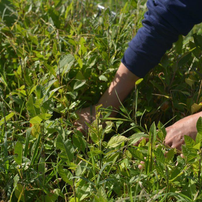 Entró en vigencia el Plan Nacional de Suelos Agropecuarios