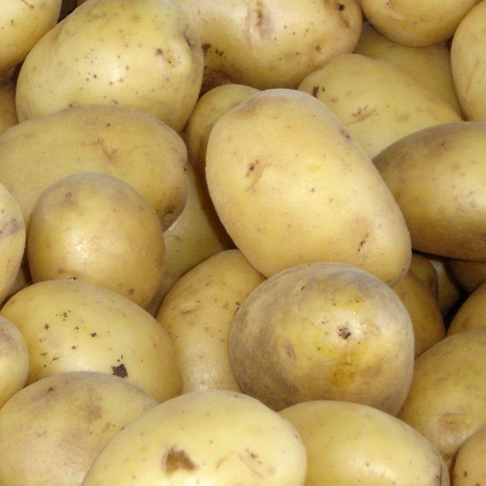 Agroindustria aprobó nuevo cultivo biotecnológico desarrollado por CONICET