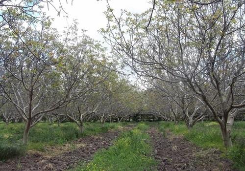 El país produce frutos secos aptos para mercados de alta calidad
