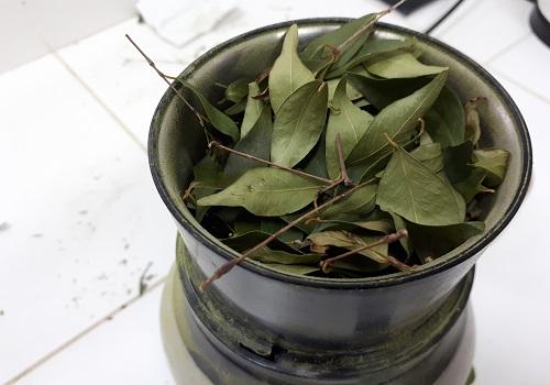 Investigadores de INTA desarrollan té antioxidante a base de hierbas ancestrales