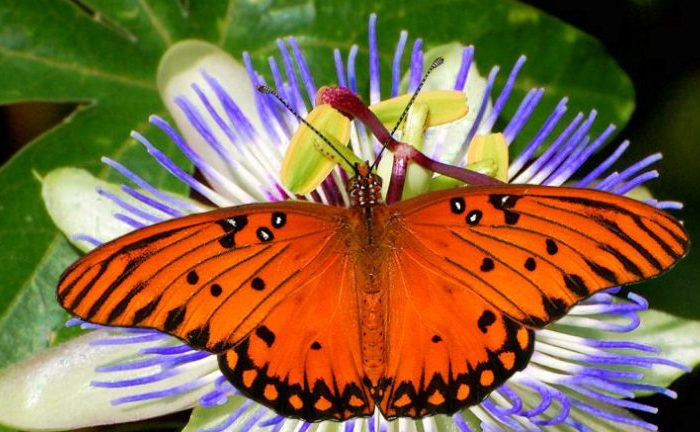 La importancia de conservar la biodiversidad en las ciudades