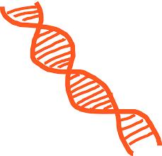 Identifican una variación genética responsables de los problemas de erección