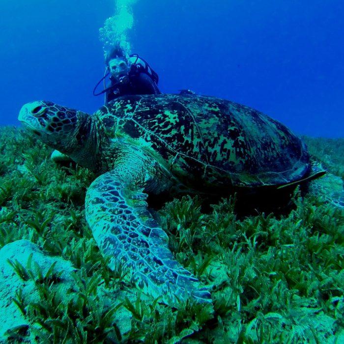 Programa para proteger a las cuatro especies de tortugas marinas de las redes pesqueras