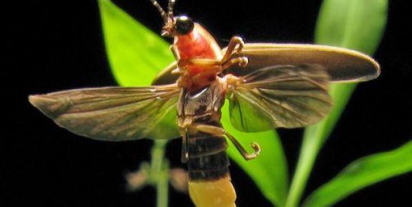 Científicos descubren el origen de la bioluminiscencia