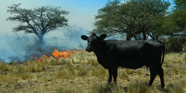 Una APP permite conocer el riesgo de incendios en tiempo real – Parte I