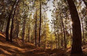 Importante compañía Cargill refuerza el compromiso con cadenas de suministro libres de deforestación