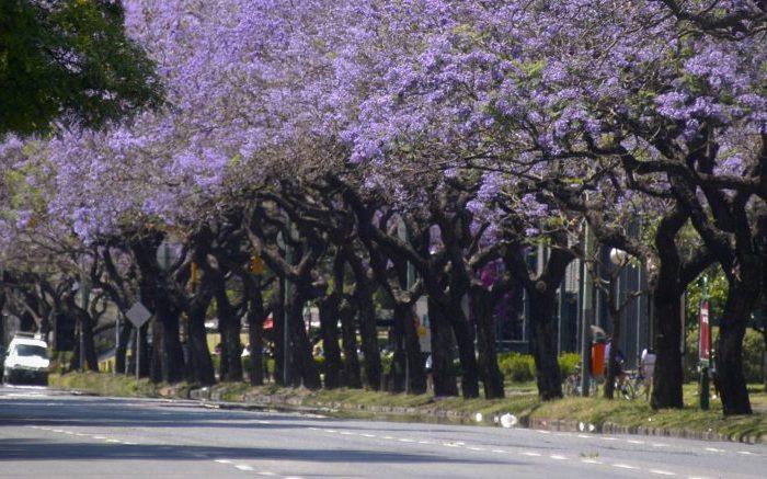 Más árboles en las calles porteñas