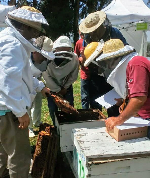 Buscan que la característica de nuestra genética de abejas se replique en el mundo