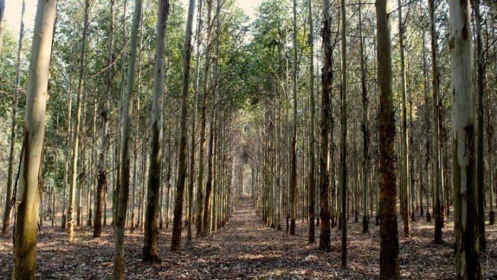 Destacan el rol de las plantaciones forestales para mitigar el calentamiento global