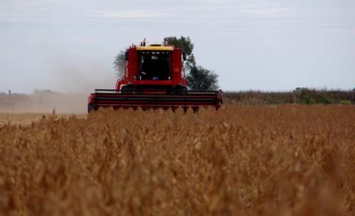 Alerta por altos niveles de pérdidas en la cosecha de la campaña récord. Recomendaciones de cosecha eficiente