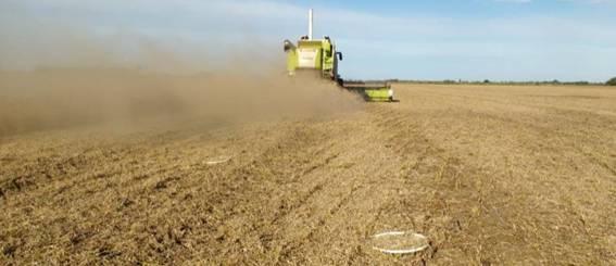 Alerta por altos niveles de pérdidas en la cosecha de la campaña récord. Recomendaciones de cosecha eficiente – Parte II