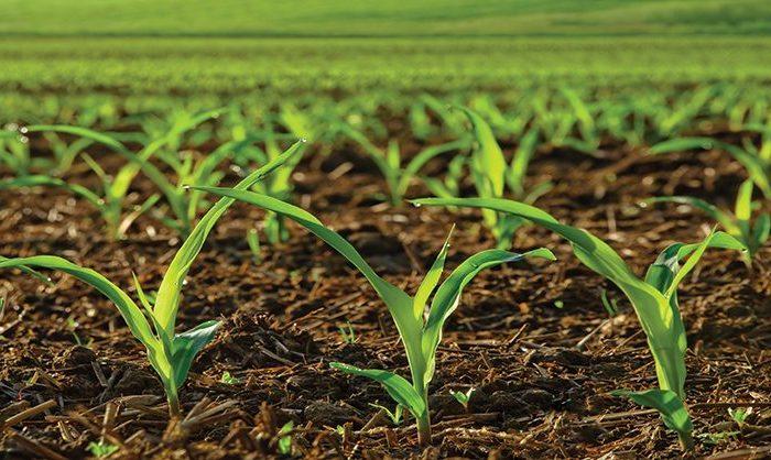 Descartan problemas de acidificación en suelos pampeanos