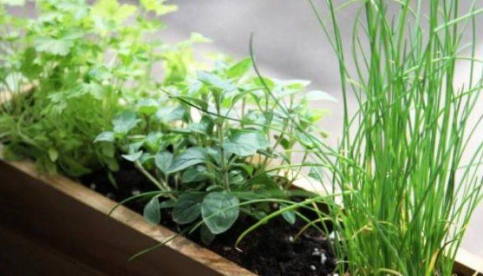Huerta en casa: cómo multiplicar las plantas aromáticas