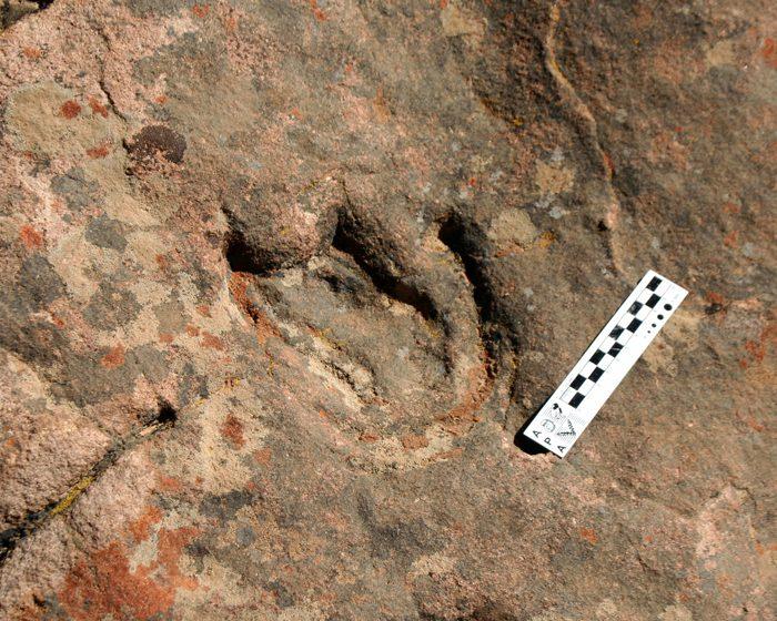 Encuentran la huella más antigua de un dinosaurio tireóforo en el hemisferio Sur