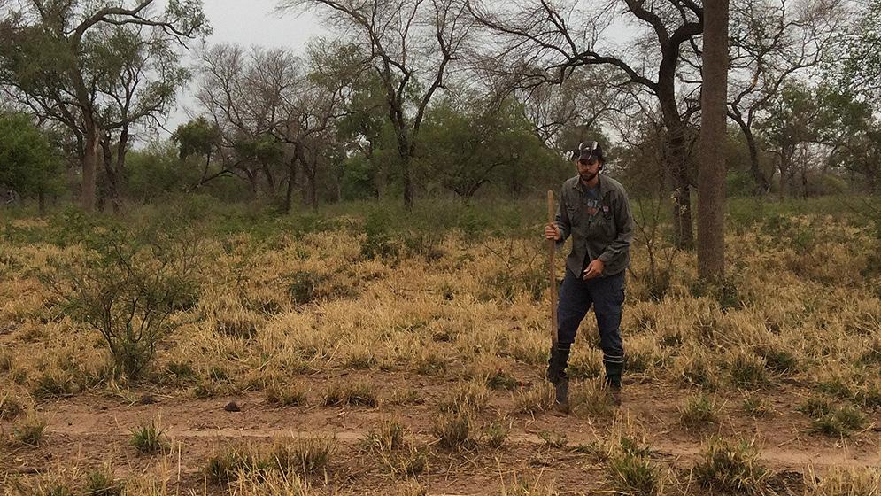Pedro Fernández muestreando carbono de suelo en sistemas silvopastoriles del Chaco semiárido. Foto: gentileza IER.