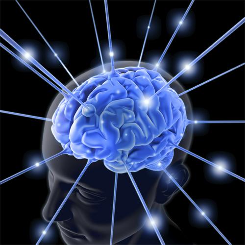 Científicos detectaron actividad eléctrica en cerebros del tamaño de un guisante cultivados en laboratorios