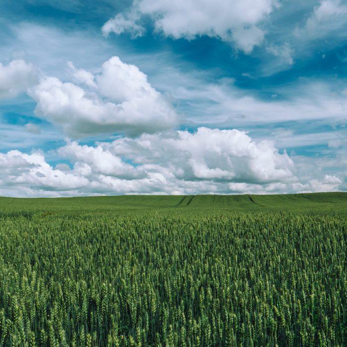 Producir más alimentos con menor impacto ambiental