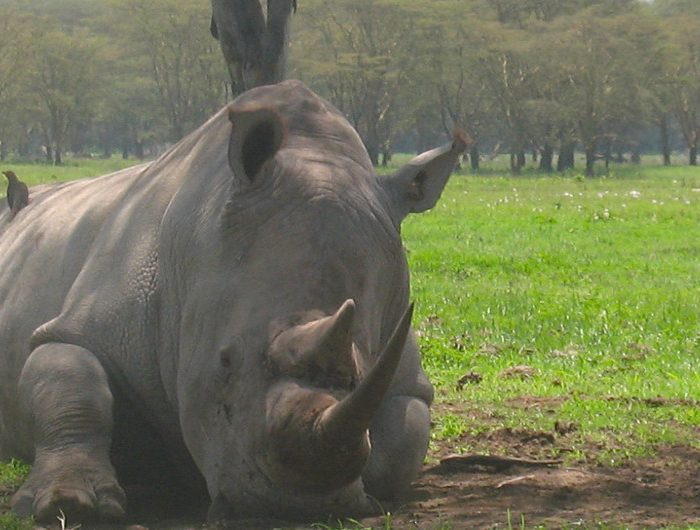 La ONU incrementa la protección de las especies animales y vegetales en todo el mundo